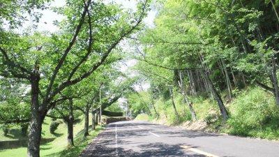 20120709学園から奥津城へ向かう道